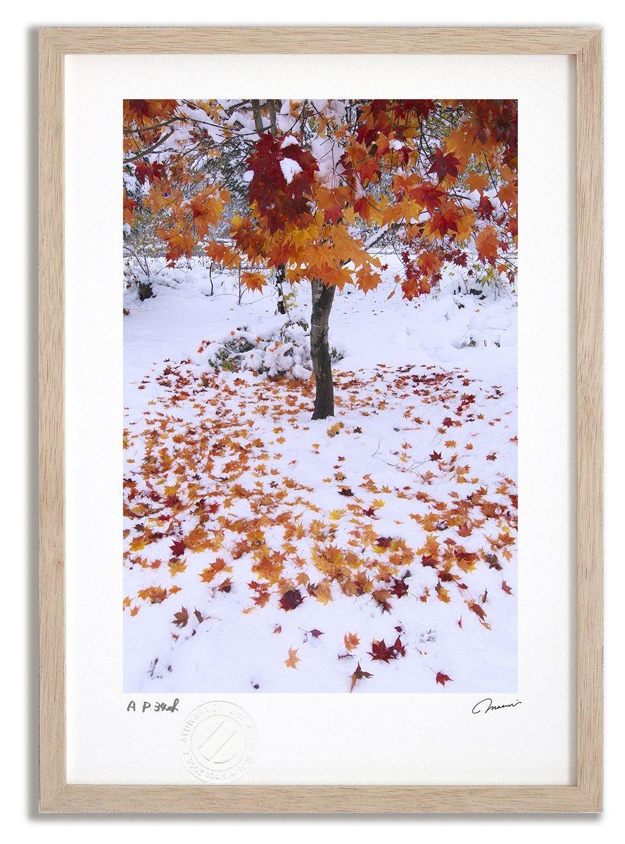 《アートフォト》新雪と紅葉3/美瑛町〔富良野・高橋真澄〕(レンタル対象)