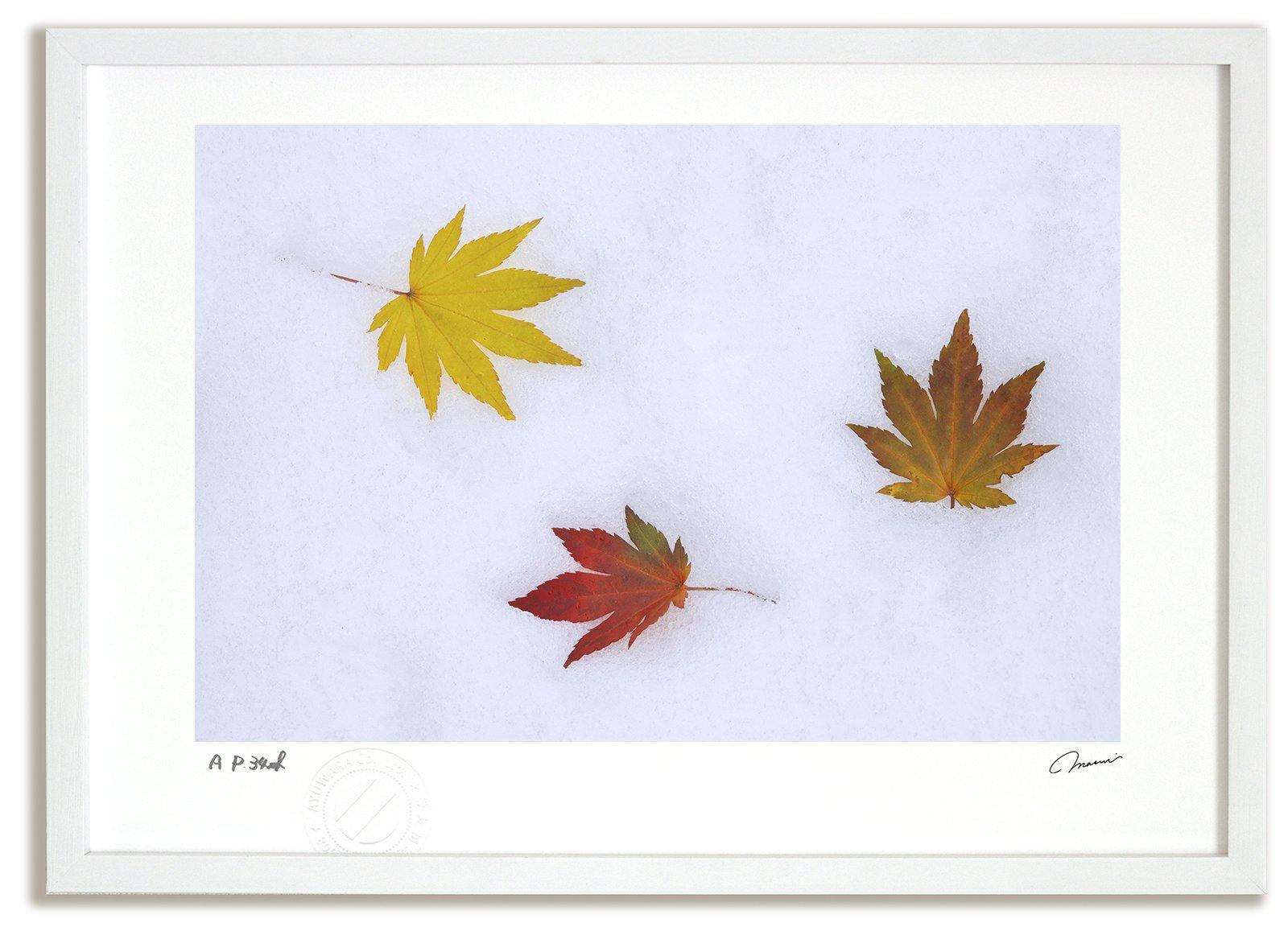 《アートフォト》新雪と落ち葉3/美瑛町〔富良野・高橋真澄〕(レンタル対象)