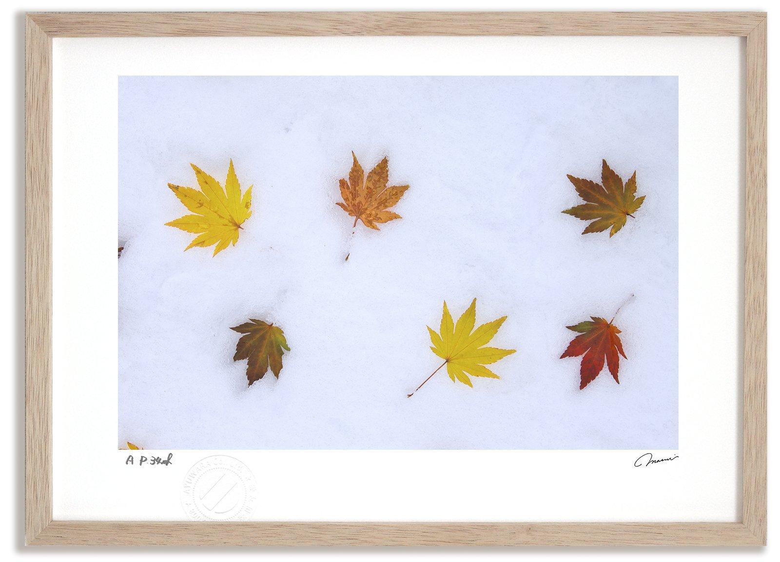 《アートフォト》新雪と落ち葉4/美瑛町〔富良野・高橋真澄〕(レンタル対象)