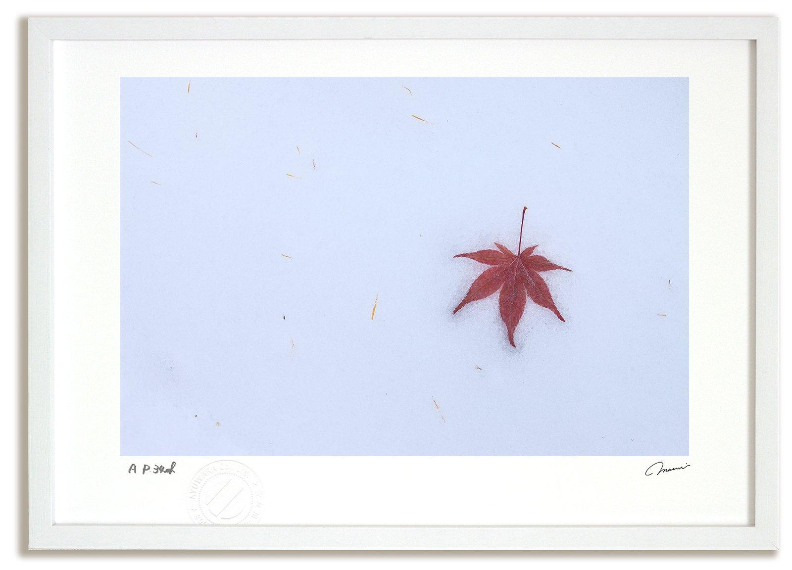 《アートフォト》新雪と落ち葉7/美瑛町〔富良野・高橋真澄〕(レンタル対象)