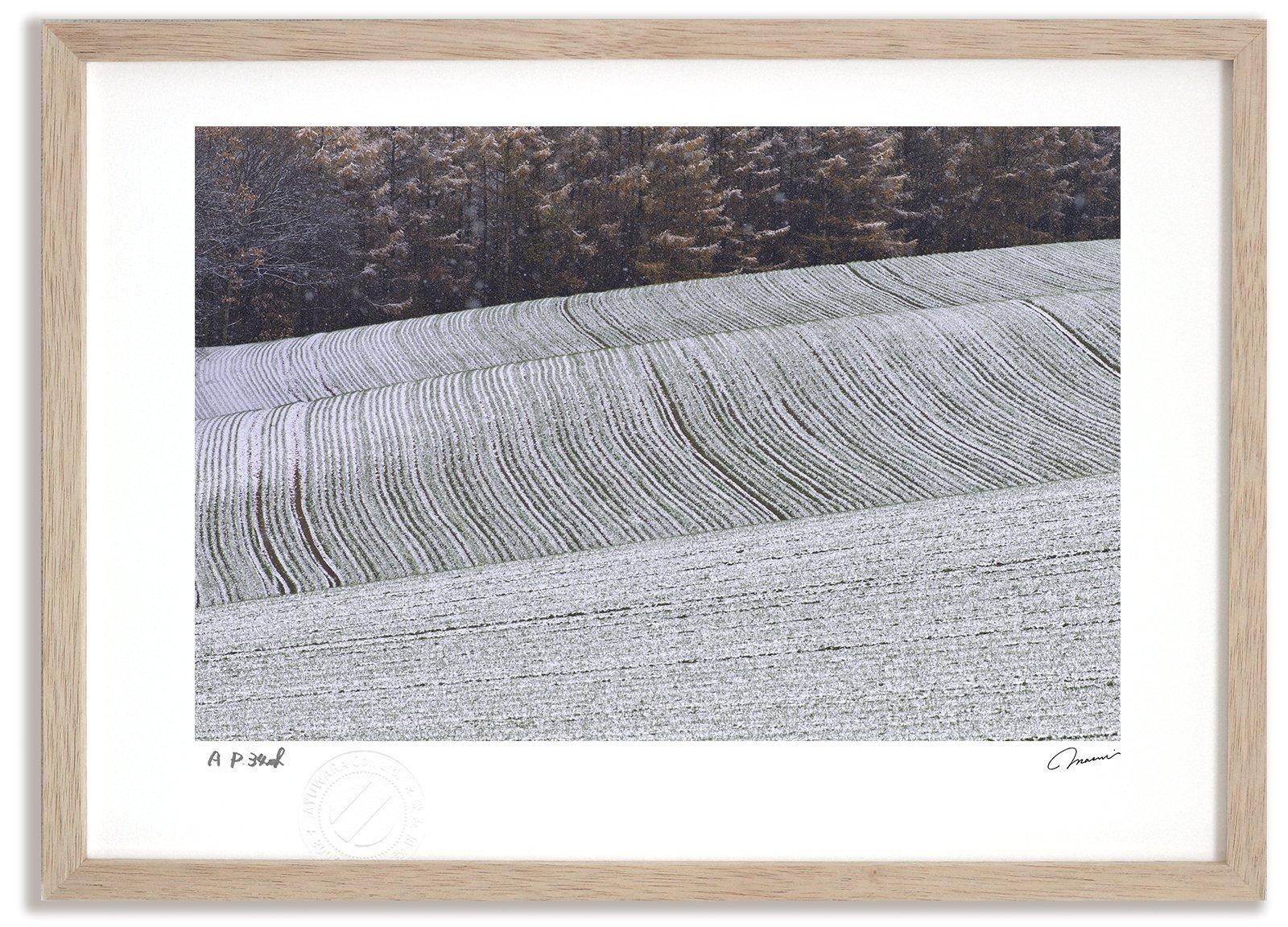 《アートフォト》新雪の丘/美瑛町〔富良野・高橋真澄〕(レンタル対象)