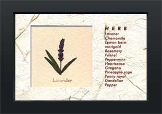 《ハーブコレクション・ミニ》Herbe Collection Mini Lavender(ラベンダー)(ゆうパケット)