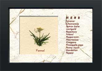 《ハーブコレクション・ミニ》Herbe Collection Mini Fennel(フェンネル)(ゆうパケット)