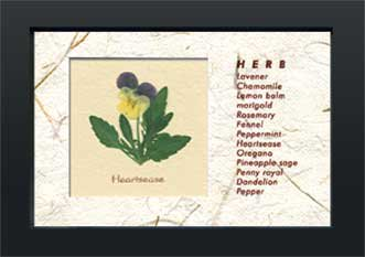 《ハーブコレクション・ミニ》Herbe Collection Mini Heartsease(すみれ)(ゆうパケット)