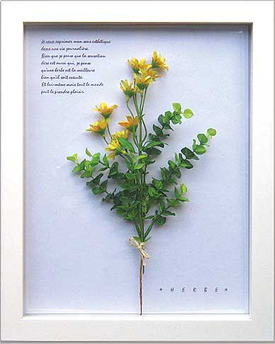 《ハーブフレーム》Herbe frame Ster Flower/Yellow