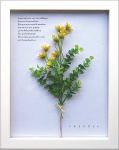 《ハーブフレーム》Herbe frame Ster Flower/Yellow