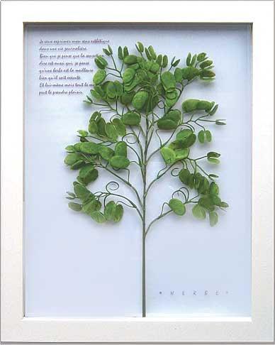 《ハーブフレーム》Herbe frame Sweet pea( スイートピー)