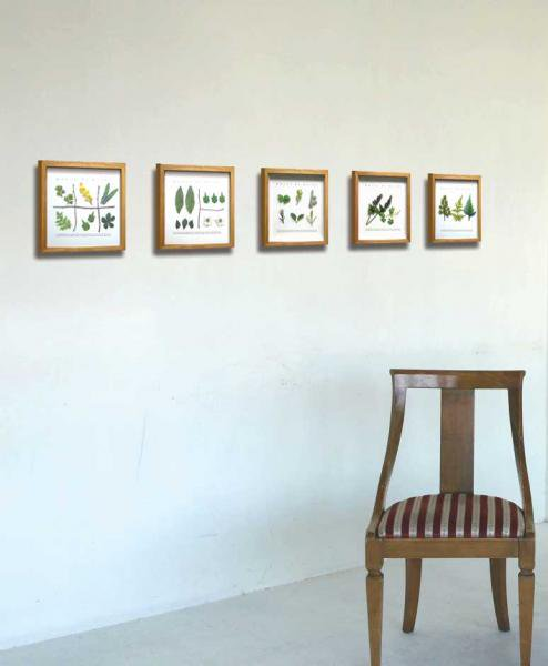 《プラントフレーム》PLANTE Frame Artemisia( アルテミシア)(ゆうパケット)