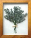 《プラントフレーム》PLANTE Frame Rosemary( ローズマリー)(ゆうパケット)