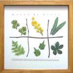 《ハーブフレーム》musee de herbe Mimosa.herb(ミュゼ ド エルブ ミモザ、ハーブ)(ゆうパケット)