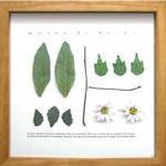 《ハーブフレーム》musee de herbe Herb(ミュゼ ド エルブ ハーブ)(ゆうパケット)
