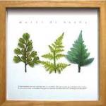 《ハーブフレーム》musee de herbe Adiantum(ミュゼ ド エルブ アジアンタム)(ゆうパケット)