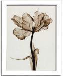 《レントゲンフォト》Steven N.Meyers Parrot Tulips I
