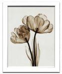 《レントゲンフォト》Steven N.Meyers Parrot Tulips II