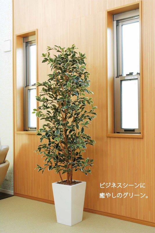 《光触媒観葉植物》ストレチア花付1.6〔フロアタイプ(ハイサイズ)〕人気作品