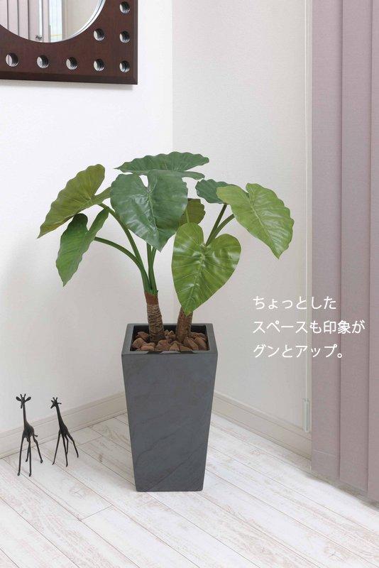《光触媒観葉植物》ロイヤルパキラ1.35〔フロアタイプ(ハイサイズ)〕人気作品