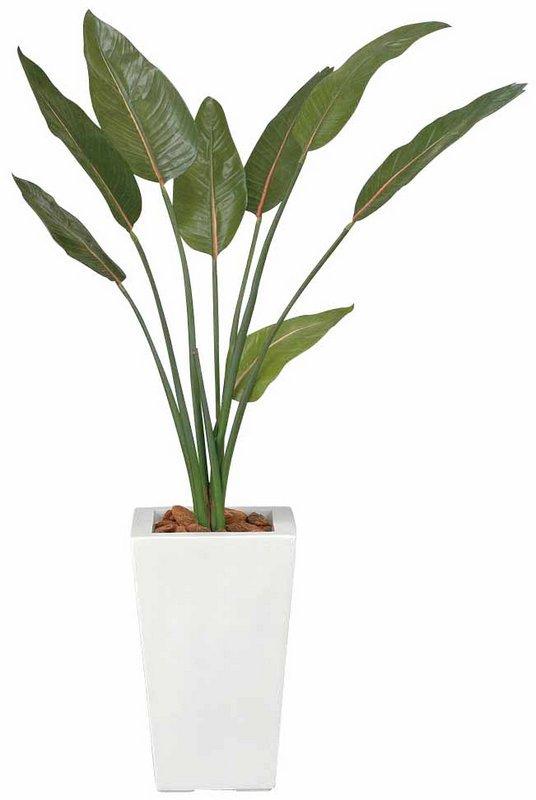 《光触媒観葉植物》ストレチア1.2〔フロアタイプ(ハイサイズ)〕人気作品