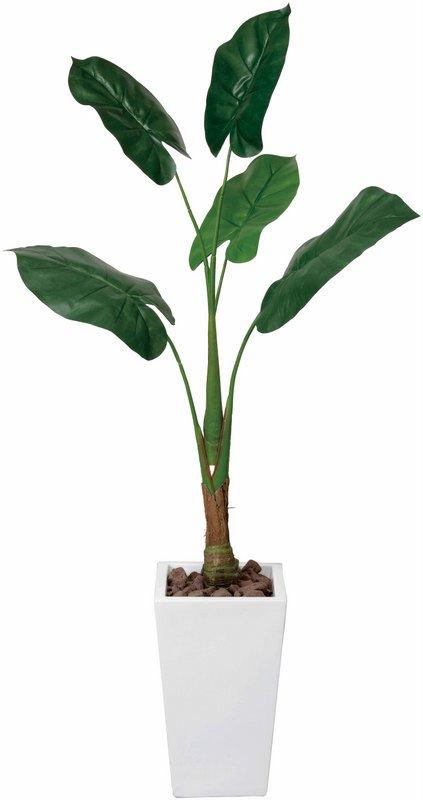 《光触媒観葉植物》くわず芋1.4〔フロアタイプ(ハイサイズ)〕