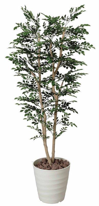 《光触媒観葉植物》トネリコ1.8〔フロアタイプ(ハイサイズ)〕