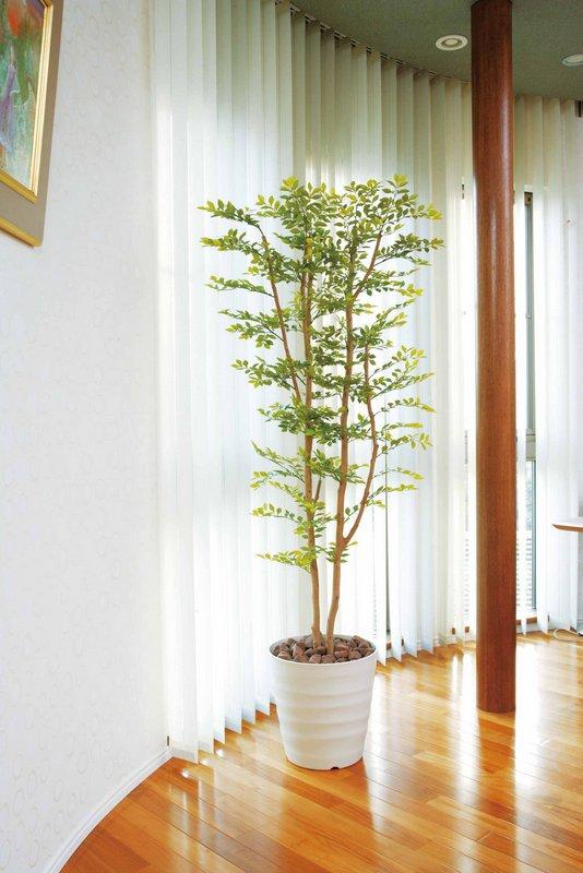 《光触媒観葉植物》オリーブ1.8〔フロアタイプ(ハイサイズ)〕