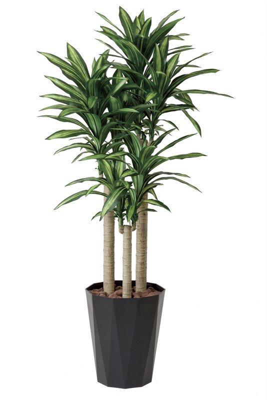 《光触媒観葉植物》幸福の木1.8〔フロアタイプ(ハイサイズ)〕