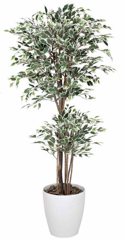 《光触媒観葉植物》トロピカルベンジャミン斑入り1.6〔フロアタイプ(ハイサイズ)〕