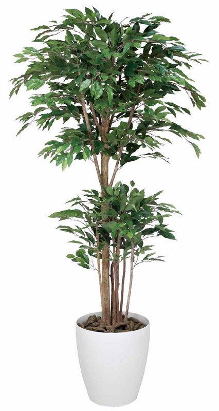 《光触媒観葉植物》トロピカルベンジャミン1.6〔フロアタイプ(ハイサイズ)〕