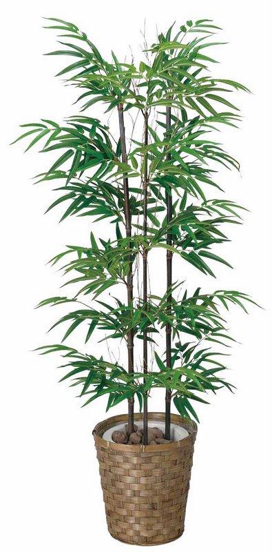 《光触媒観葉植物》黒竹1.2〔フロアタイプ(ハイサイズ)〕