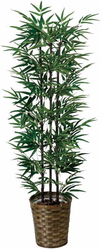 《光触媒観葉植物》黒竹1.35〔フロアタイプ(ハイサイズ)〕