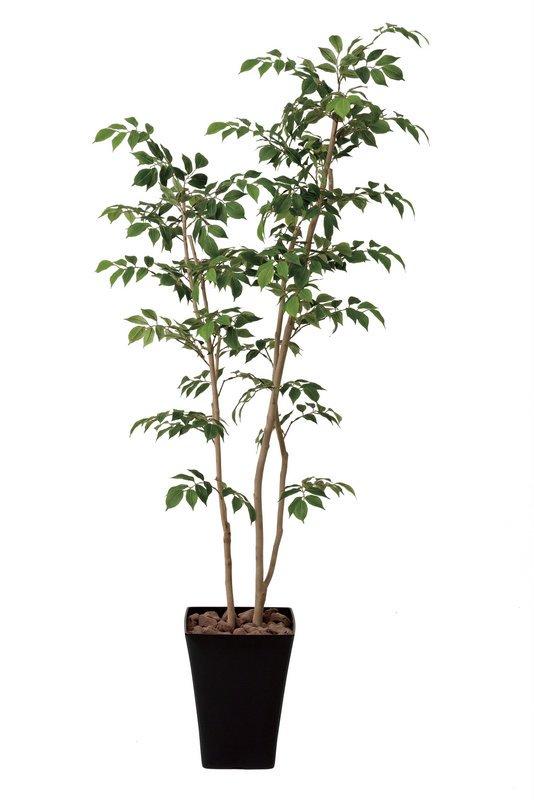 《光触媒観葉植物》マウンテンアッシュ1.6〔フロアタイプ(ハイサイズ)〕人気作品