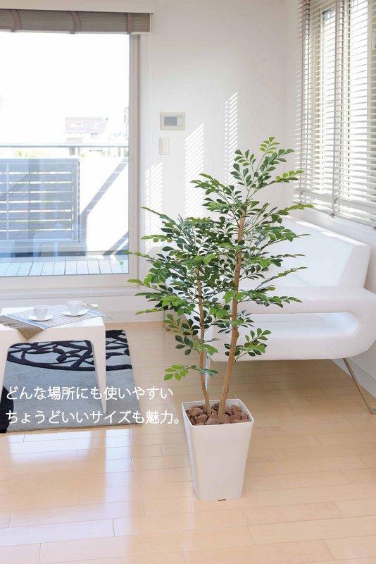 《光触媒観葉植物》ドラセナ1.25〔フロアタイプ(ミドルサイズ)〕
