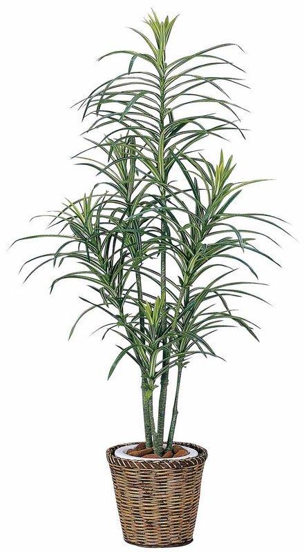 《光触媒観葉植物》ドラセナコンシンネ1.3〔フロアタイプ(ミドルサイズ)〕