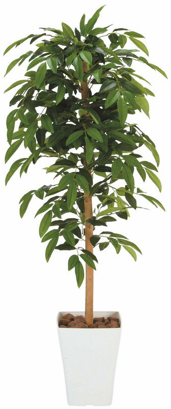 《光触媒観葉植物》アルデシア1.2〔フロアタイプ(ミドルサイズ)〕
