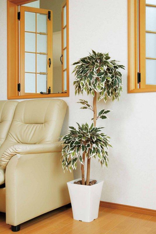 《光触媒観葉植物》斑入りベンジャミンダブル1.2〔フロアタイプ(ミドルサイズ)〕