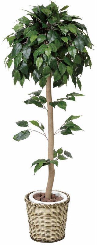 《光触媒観葉植物》ベンジャミントピアリー1.5〔フロアタイプ(ミドルサイズ)〕