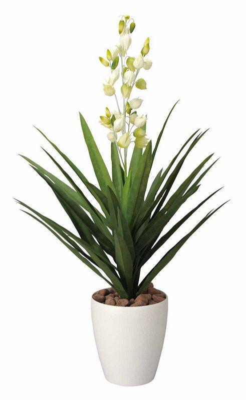 《光触媒観葉植物》リューゼツラン花付1.0〔フロアタイプ(ミドルサイズ)〕