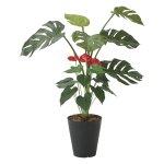 《光触媒観葉植物》モンステラ&アンスリューム95〔フロアタイプ(ミドルサイズ)〕ギフトで人気