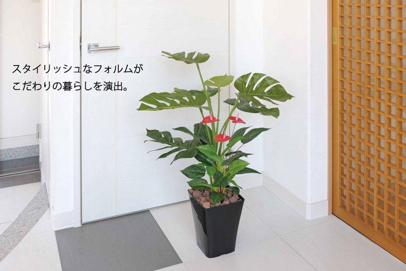 《光触媒観葉植物》くわず芋1.0〔フロアタイプ(ミドルサイズ)〕