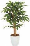 《光触媒観葉植物》アルデシア90〔フロアタイプ(ミドルサイズ)〕人気作品