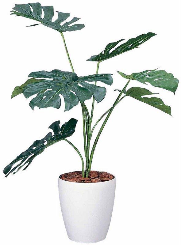《光触媒観葉植物》モンステラ90〔フロアタイプ(ミドルサイズ)〕