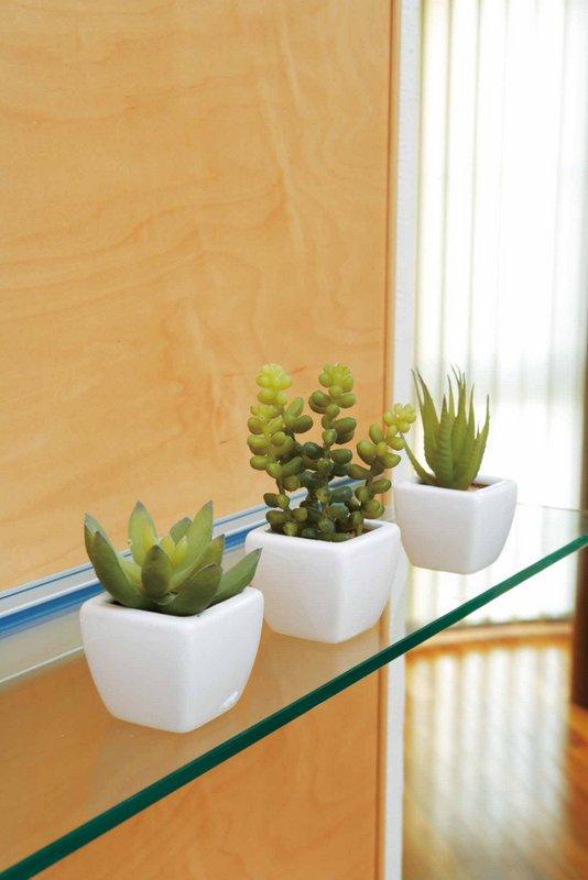 《光触媒観葉植物》多肉植物3点セット〔テーブルタイプ〕人気作品