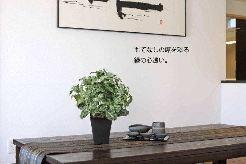 《光触媒観葉植物》プチハート多肉3点セット〔テーブルタイプ〕ギフトで人気