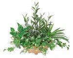 《光触媒観葉植物》寄せ植えオリーブ〔テーブルタイプ〕