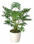 《光触媒観葉植物》スプリット〔テーブルタイプ〕ギフトで人気