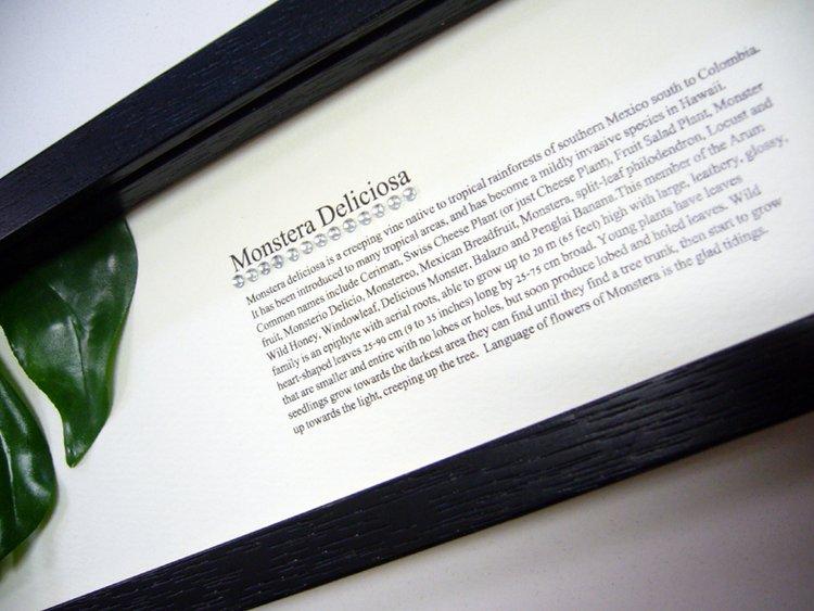 《リーフパネル》ハディアフータン/森のおくりもの ホスタリーフ1(ブラック)(ゆうパケット)
