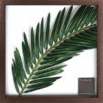 《リーフパネル》F-style Frame Elaeis guineensis(ギニアアブラヤシ)