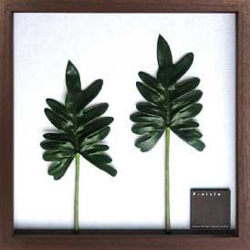 《リーフパネル》F-style Frame Philodendron  cv. kookaburra(フィロデンドロン クッカバラ)