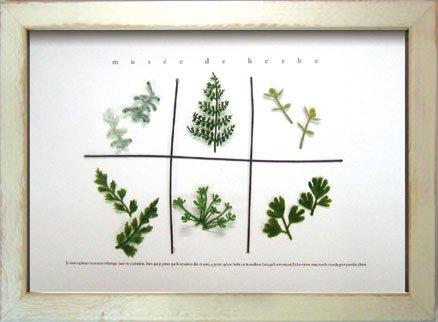《ハーブフレーム》musee de herbe Herbe I(ミュゼ ド エルブ ハーブ1)
