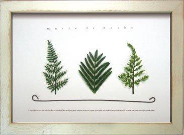 《ハーブフレーム》musee de herbe Herbe V(ミュゼ ド エルブ ハーブ5)