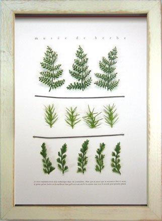 《ハーブフレーム》musee de herbe Herbe III(ミュゼ ド エルブ ハーブ3)